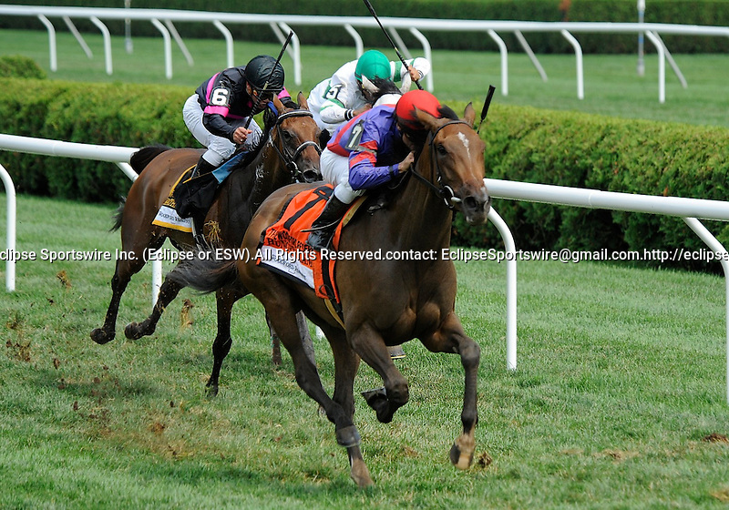 Hungry Island (no. 7), ridden by Alex Solis and trained by Claude McGaughey, defeats heavy favorite Winter Memories (no. 5) and wins the 28th running of the grade 2 Lake Placid Stakes for three year old fillies on August 21, 2011 at Saratoga Race Track in Saratoga Springs, New York.  (Bob Mayberger/Eclipse Sportswire)