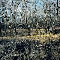 The forested habitat for hunting white tail deer near Superior, Nebraska, Thursday, December 1, 2011. ..Photo by Matt Nager