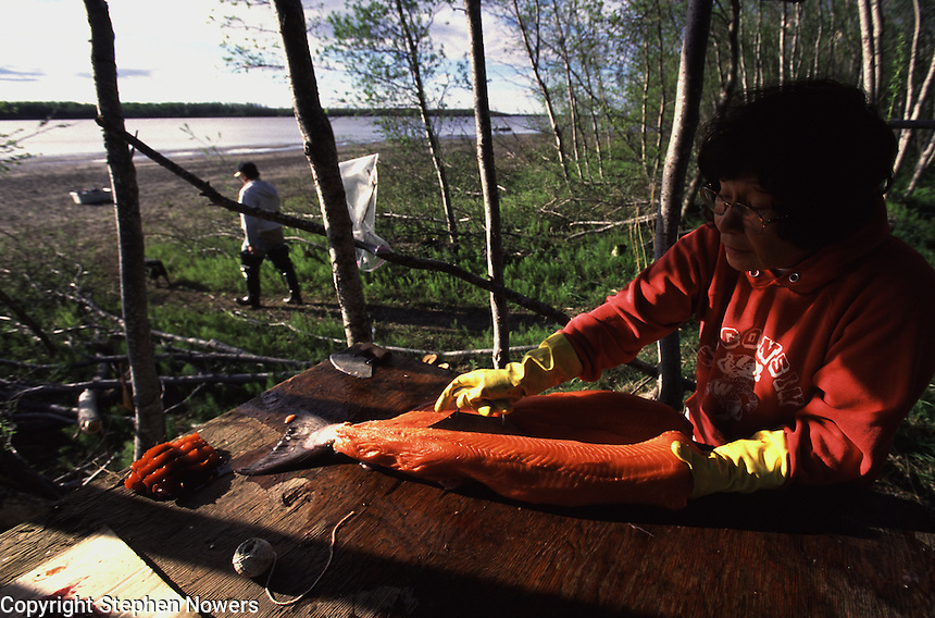 Joan Hamilton of Bethel, Alaska, fillets a king salmon at her family's subsistence fish camp on the Kuskokwim River in Southwest Alaska. Hamilton, a Chup'ik eskimo, cold smokes the fish to store it for the winter.