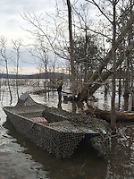 NWA Democrat-Gazette/FLIP PUTTHOFF<br /> Retrieving downed ducks with a boat is one option for hunters. Camouflage netting hides the boat during a Beaver Lake duck hunt on Dec. 31, 2015.