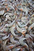 Cao Frio_RJ, Brasil...Detalhe do camarao de Cabo Frio...The Shrimp detail of Cabo Frio...Foto: JOAO MARCOS ROSA / NITRO..
