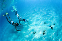 Snorkelers diving down to see the seastars in the sand<br /> Buck Island National Monument<br /> St. Croix<br /> U.S. Virgin Islands
