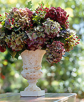 A vase of drying Hydrangeas and berries