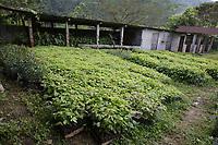 Nursery for reforestation; Buenaventura Ecological Reserve, Ecuador, Prov. El Oro