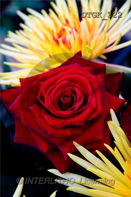 Gisela, FLOWERS, photos(DTGK322,#F#) Blumen, flores, retrato