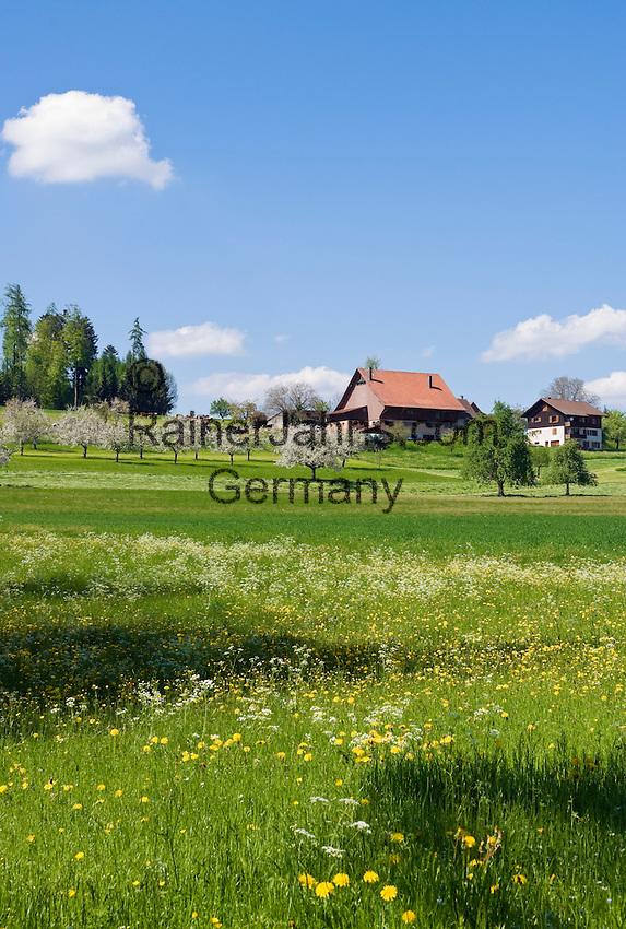 CHE, Schweiz, Kanton Thurgau, bei Steckborn, Bauernhof, Blumenwiese und Apfelbluete   CHE, Switzerland, Canton Thurgau, near Steckborn, farmhouse, flower meadow and apple blossom