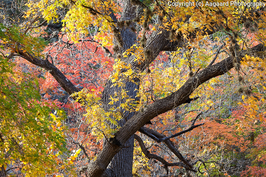 Lost Maples State Natural Area - November 2011.<br /> <br /> Canon EOS 5D MkII, 70-200 f/2.8L lens