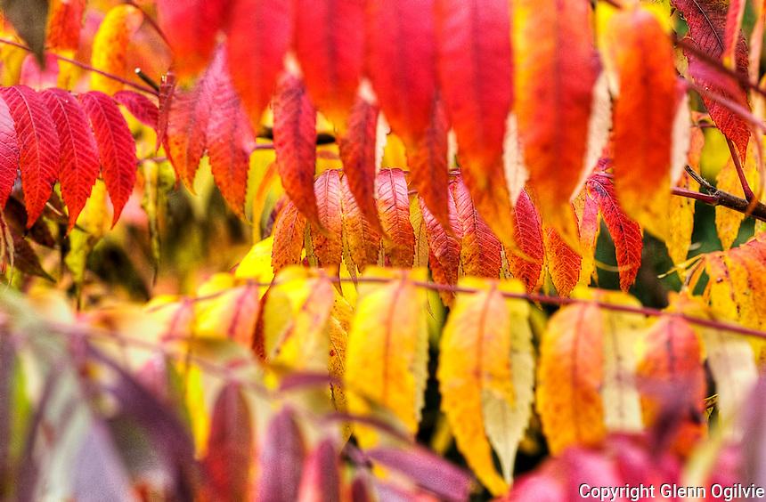 Fall colours Canatara Park, Tarzanland, University of Western Ontario, Research Park.