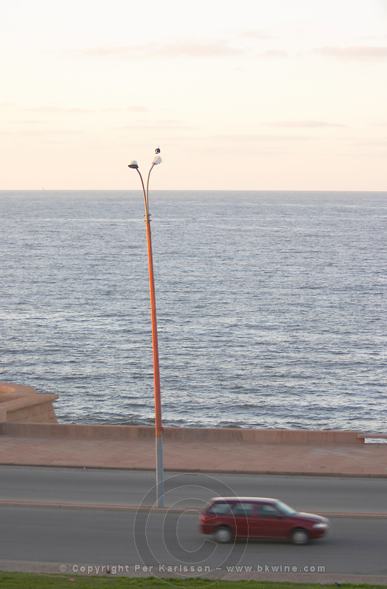 Coast line with a car driving past at dawn along a street. A lamp post with a lone single sea gull against the horizon. Montevideo, Uruguay, South America