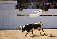 Europe/France/Aquitaine/40/Landes/ Vielle-Tursan: Sauteur en action ors de la course landaise organisée pour la fête du village //  France, Landes, Vielle Tursan, sauteur performer during a bullfight at the Fete du Village Festival