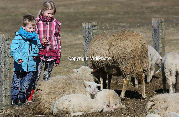Foto: VidiPhoto..EDE - De 170 pasgeboren lammetjes van schaapherder Henk van de Brandhof op de Ginkelse hei bij Ede, genieten dinsdag van de lentezon. De dieren liggen naast de schaapskooi uit de wind. De schapen van de Edese schaapherder moeten noodgedwongen thuis blijven omdat er door het droge en koude weer geen grasspriet groeit op de heidevelden. Volgens Van de Brandhof is er snel regen en warmte nodig. Omdat ze niet op de hei kunnen vreten, moeten er extra kosten gemaakt worden door het bijvoeren van de dieren..