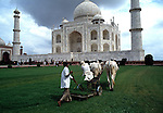 Asie, Inde du nord, état de l'Uttar Pradesh, le Taj Mahal construit par Shah Jahan de 1631 à 1653 et classé au patrimoine mondial par l'Unesco, jardiniers tondant la pelouse//Asia, north India, Uttar Pradesh state, Taj Mahal built by Shah Jahan from 1631 to 1653 and classified at the Unesco world heritage, gardeners mowing the grass