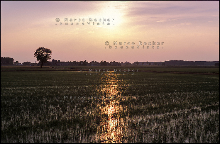 Besate (Milano). Risaia al tramonto --- Besate (Milan). Ricefield at sunset