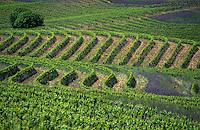 Vignoble Australien / Australian Wineyard