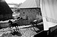 ROMANIA / Maramures / Valeni / March 2003..The courtyard of the Nemes family home in springtime. Each family compound has a barn for keeping horses, cows, pigs and a week's worth of hay. ..© Davin Ellicson / Anzenberger..
