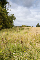 Field margins after harvest - Lincolnshire, September