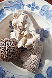 EXUMAS, Bahamas. Coral collection in a bowl at the Hill House at Fowl Cay Resort.