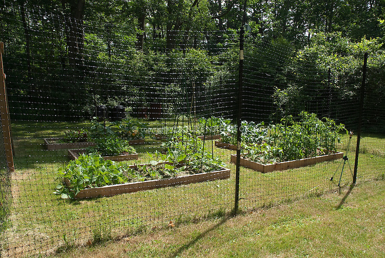 deer fencing around vegetable garden plant flower