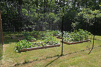 Fence to keep out deer from vegetable garden on lawn with raised beds
