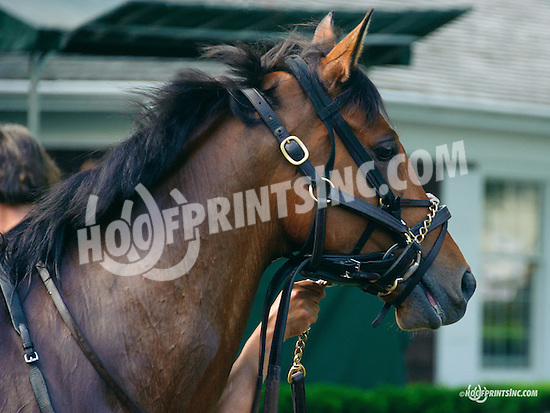 A One in the paddock at Delaware Park on 5/30/15