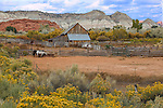 A typical Utah landscape, Barn and horses, USA