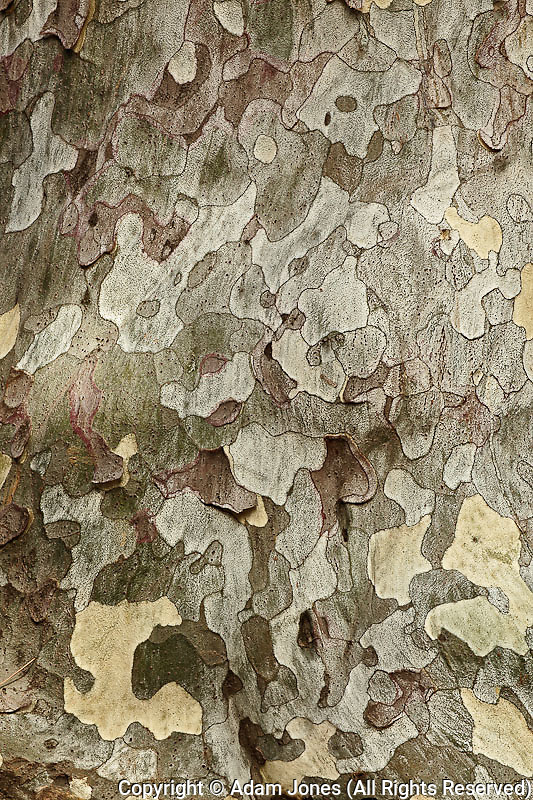 Pattern in tree bark, Beijing, China