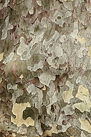 Pattern in tree bark, Beijing, China