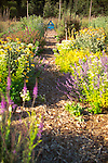 Looking down a long path through an organic kitchen garden (a modern day Victory Garden) of mixed vegetables and colorful flowering herbs on Vashon Island in Washington State's Puget Sound. Garden design by Stenn Design
