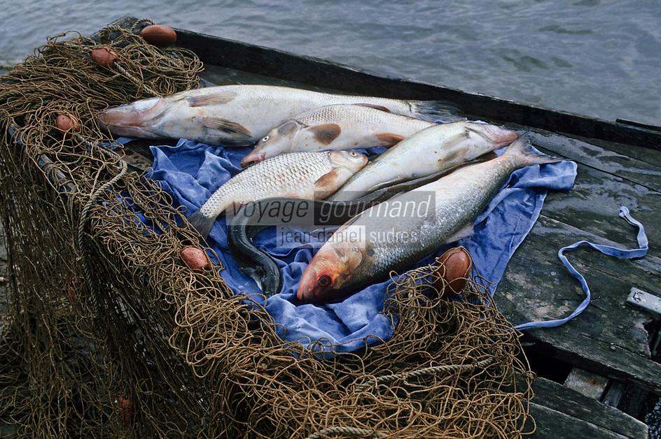 Europe/France/Pays de la Loire/49/Maine-et-Loire/Env Les Rosiers-sur-Loire: Saumon, truite, anguille, etc - Les pêches de Jacky le pêcheur