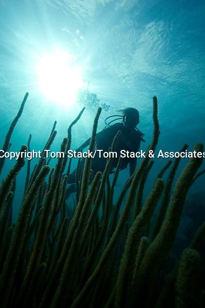 Scuba Diver and soft coral, Florida Keys National Marine Sanctuary