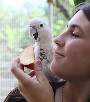 Weißhaubenkakadu Charly bekommt von Praktikantin Lisa Lachmann etwas Apfel zur Erfrischung - Weiterstadt 05.08.2018: Tag der offenen Tür auf der Keller-Ranch