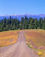 Road in Hell's Canyon National Recreational Area with Wallowa Mountains, Oregon