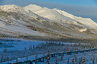 Trans Alaska oil pipeline crosses the taiga of the south side of the Brooks Range mountains, Arctic, Alaska