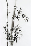 Bamboo stalk with leaves Japanese Zen painting Sumi-e, oriental black ink on rice paper illustration fine artwork