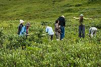 Botanical Alaska