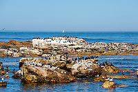 The Cape of Good Hope  on the Atlantic coast of Cape Peninsula, South Africa. Cormorants on the cliffs.
