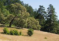Divide Meadow, Point Reyes National Seashore, California