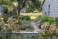 Flowerbeds of herbs and Hydrangea line a gravel path in the charming garden of this house in Sag Harbour