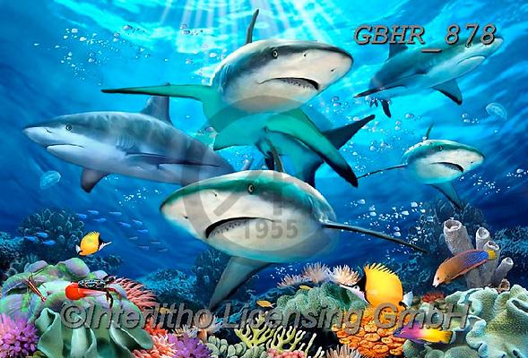 Howard, SELFIES, paintings+++++,GBHR878,#Selfies#, EVERYDAY ,sharks,maritime