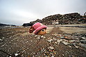 March 8, 2012, Minamisannriku-cho, Japan - The head of a doll is abandoned at an empty lot at Minamisannriku-cho, Miyagi Prefecture, some 365 km northeast of Tokyo, on Thursday, March 8, 2012. ..One year after the strongest earthquake ever to hit Japan, the economy is recovering and massive cleanup operations are in full swing throughout much of the countrys northeastern region. But once-pastoral landscapes that were piled with rubble and debris have become empty wastelands due mainly to bickering and disagreements between the central and local governments over rebuilding the devastated region. A year later, more than 260,000 people still live in temporary shelters. (Photo by Natsuki Sakai/AFLO) AYF -mis-.