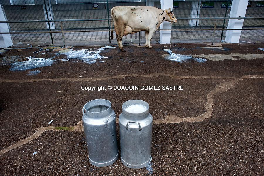 En el mercado de ganados hay una zona de ordeño para vacas, en primer plano dos tipicas ollas en donde se vierte la leche.