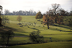 26/11/2016.  Burghley Park,  United Kingdom. Geese flying in Burghley Park, Stamford, Lincolnshire. Jonathan Clarke / JPC Images