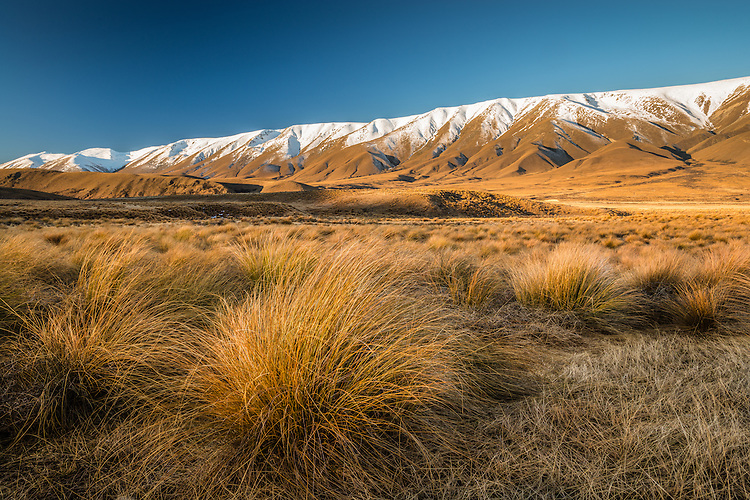 Tussocks, Hawkdun Mountain Range, Sunset, Central Otago, New Zealand - stock photo, canvas, fine art print