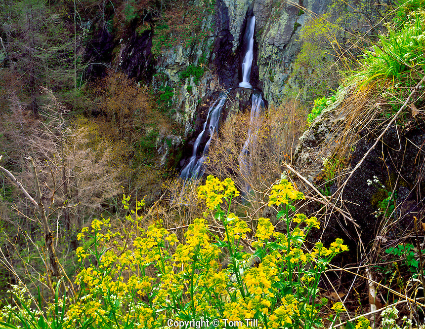 South River Falls  Shenandoah National Park, Virginia Wild mustard blooms  Appalachian Mountains  Afternoon