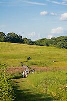 Wildflower meadow path, Longwood Gardens, Pennsylvania