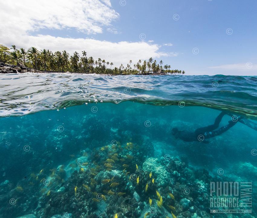 Yellow tang fish and a diver at Two Step dive and snorkeling spot near Pu'uhonua o Honaunau, or City of Refuge, Honaunau Bay, Hawai'i Island.