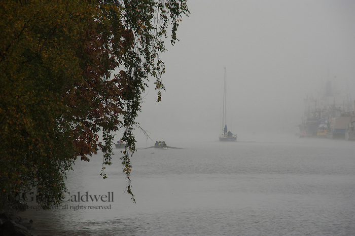 Fog along the Lake Washington Ship Canal.