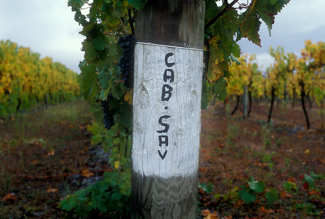 Vineyard sign in New Zealand