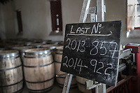 Botti per invecchiamento whisky, barrels, produzione 2013 e 2014 Distilleria whisky, la fase di invecchiamento in botte<br />