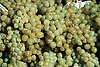 Wei&szlig;weintrauben<br />